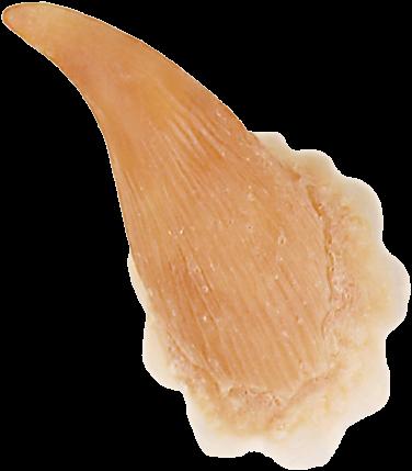 Grimas Latex Hoorns