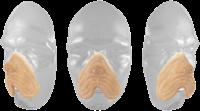 Grimas Latex Hondensnuit-2