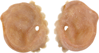 Grimas Latex Varkens Oren