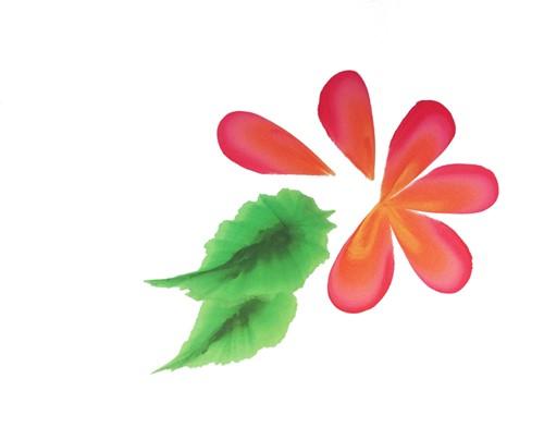 PXP Splitcake penseel maat 12-3