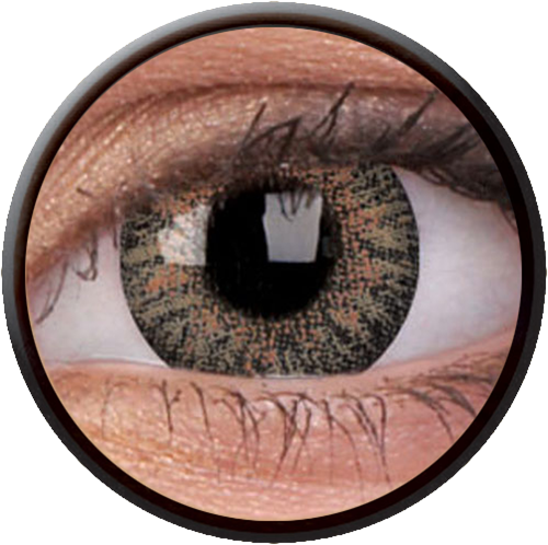 Trublend One-Day Brown Contactlens