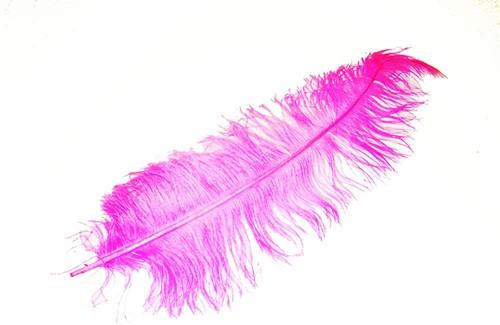 Roze Pieten Veer